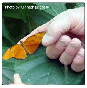 passing on butterflies 2