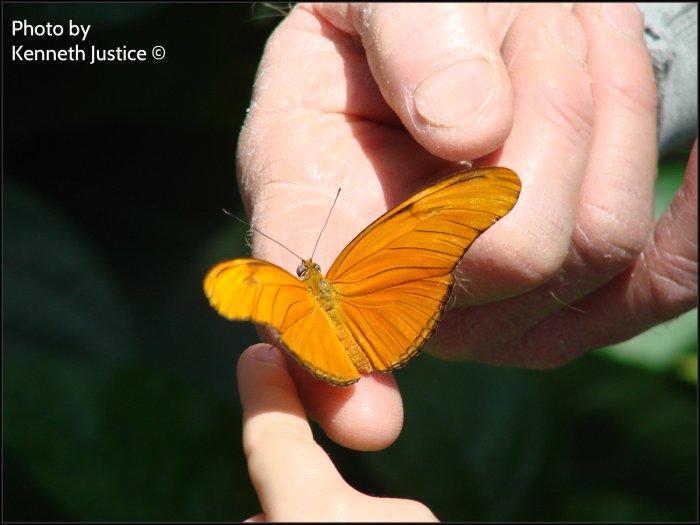 passing on butterflies