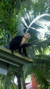 a monkey on the roof of my hotel room
