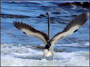 1sea bird